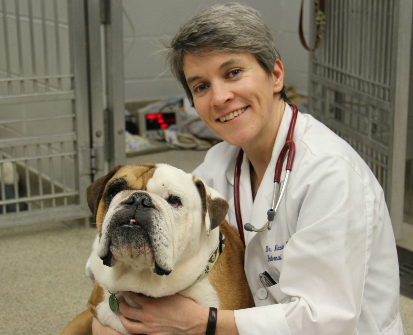 Innovative vaccine offers canine cancer patients a shot at a longer, happier life