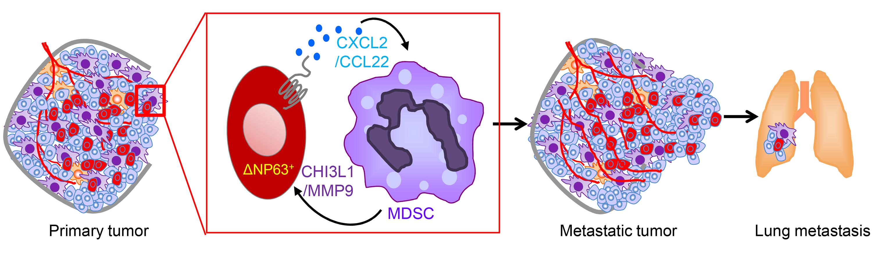 Ce 3 alimente de evitat pentru limfomul cu celule mari anaplazice?