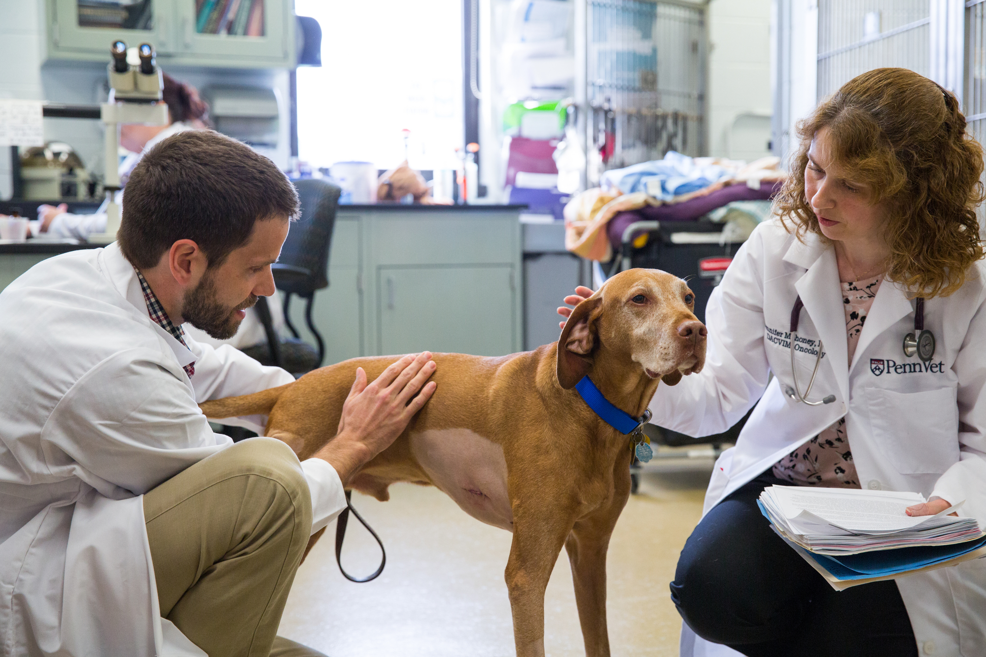 Cutting-edge science moves to the clinic to help 'our furry friends' fight cancer