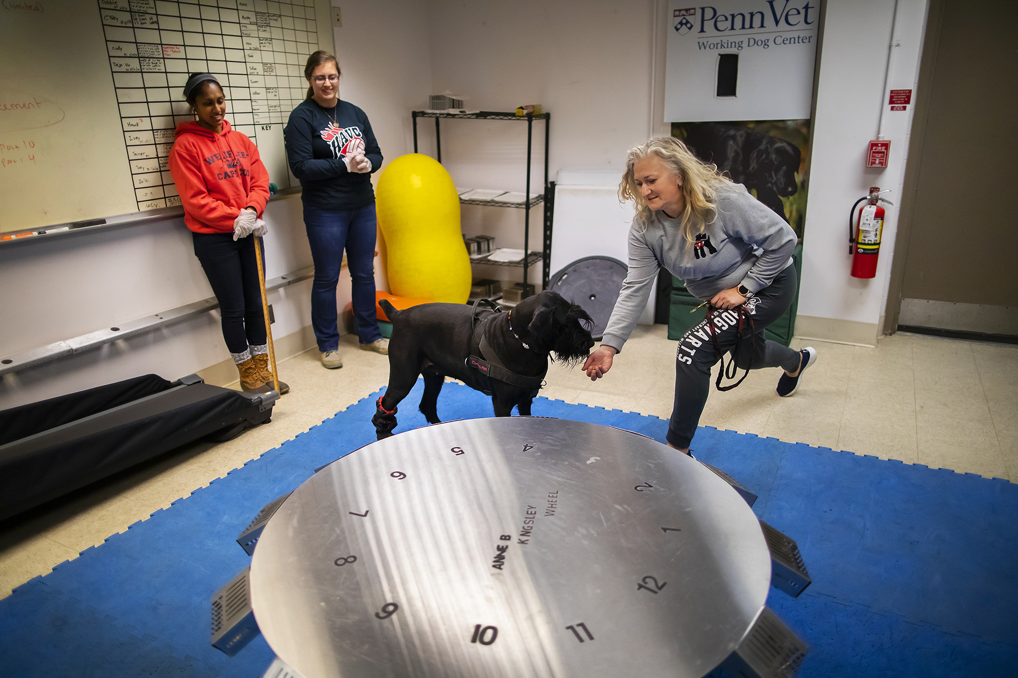 Challah, a black giant schnauzer, interacts with her owner as two others look on. They are in front of a large wheel with 12 numbered slots.