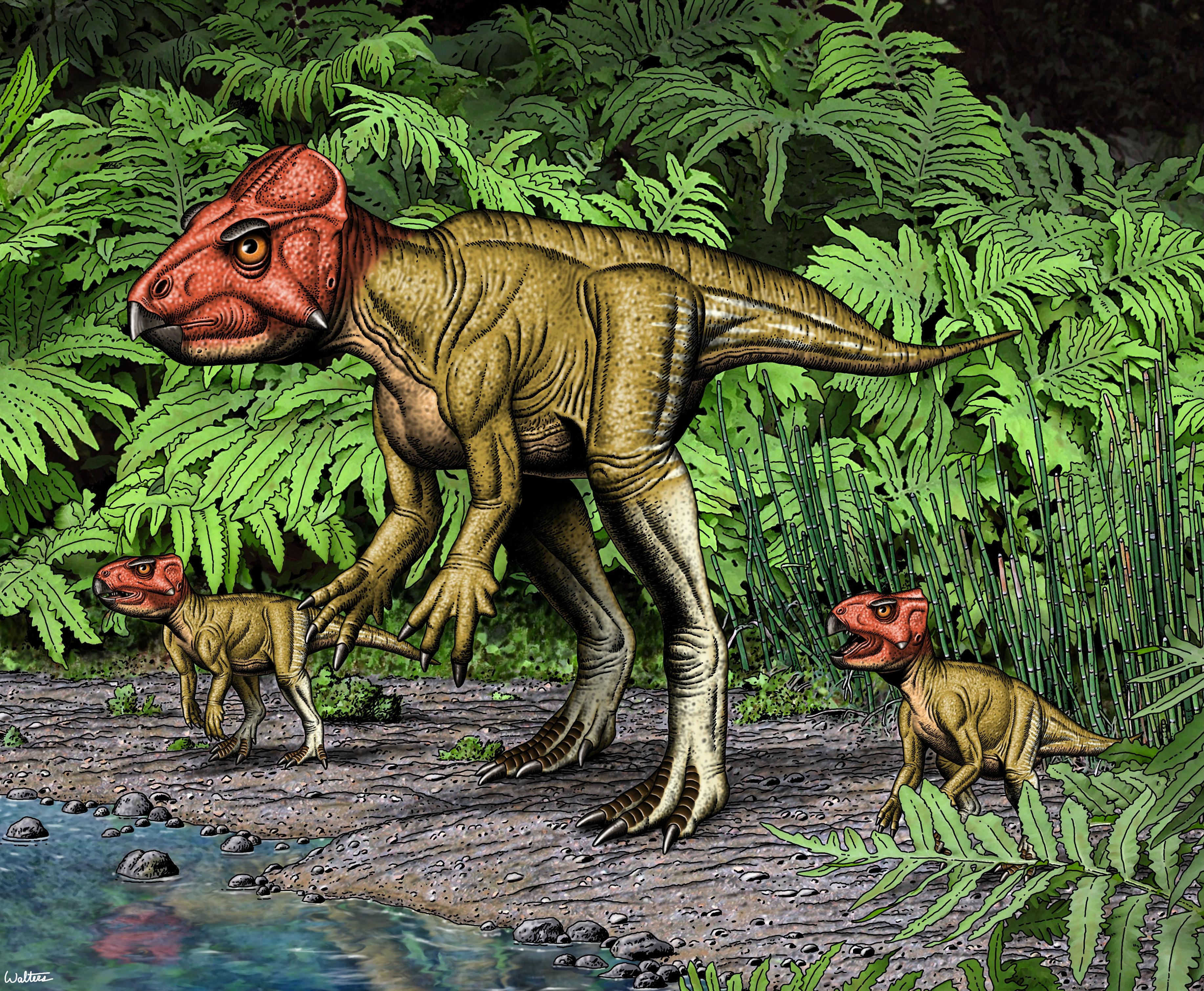 auroraceratops%20dodson%20_0.jpg