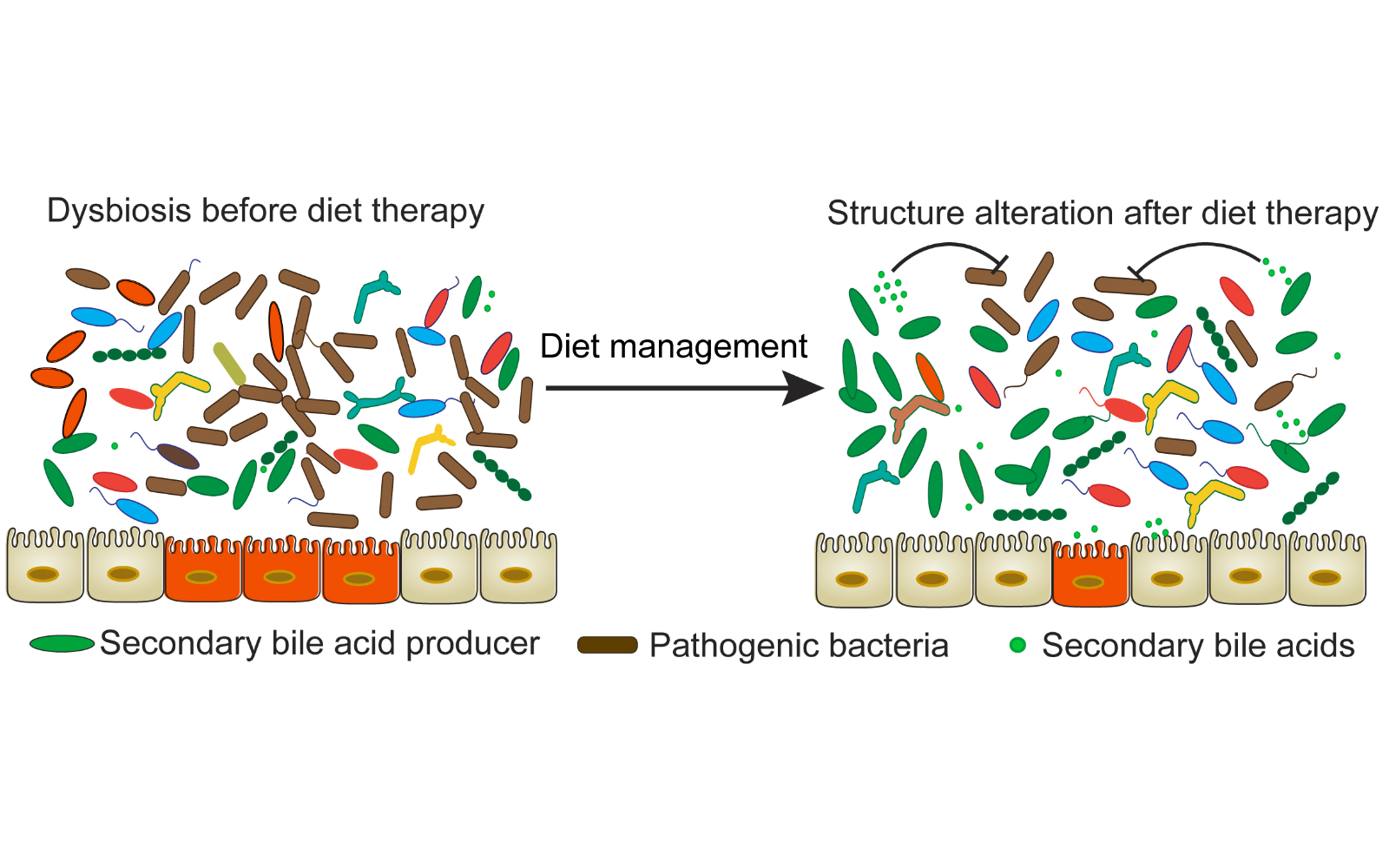 [Oncological relevance of gut and urine microbiomes]
