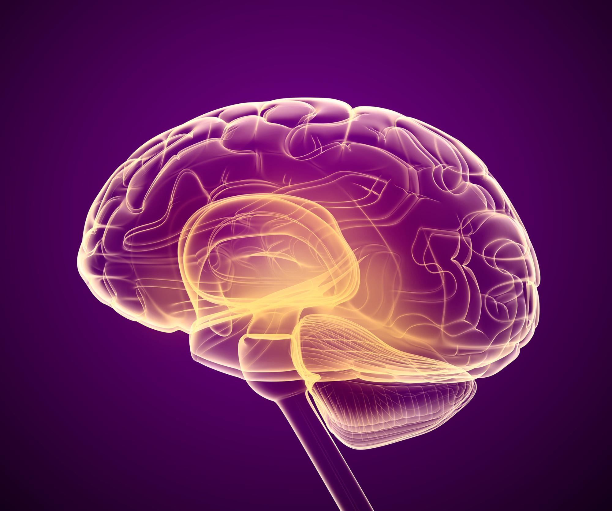 Side Scab of human brain beating brain fog