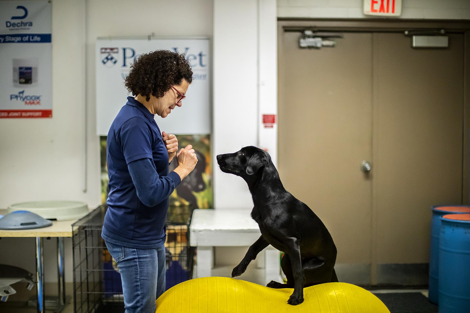 Entraîneur Penn Vet Working Dog Center avec équipement pour chien d'équilibrage