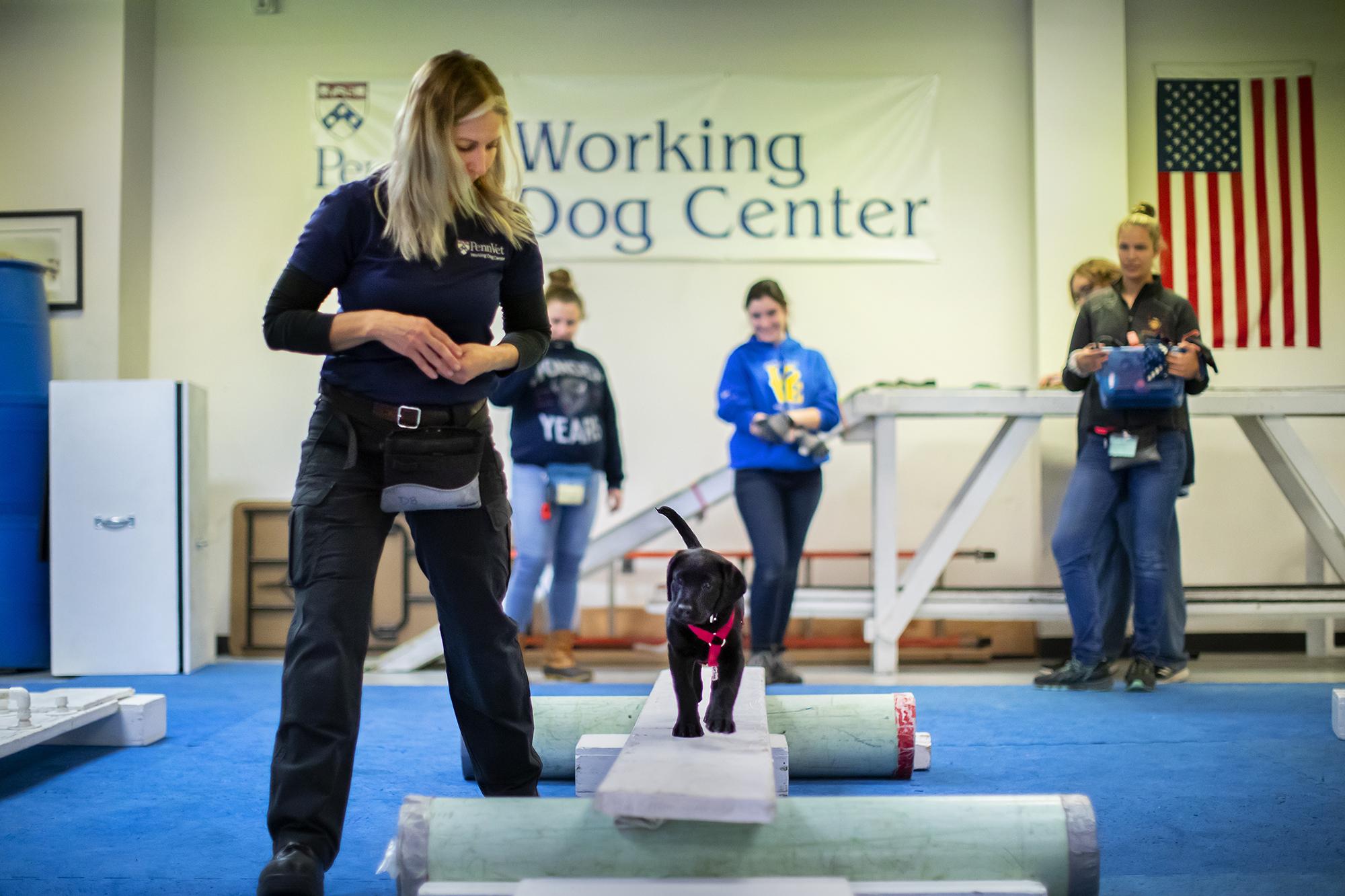 Un entraîneur du Penn Vet Working Dog Centre guide sur le lit du chien