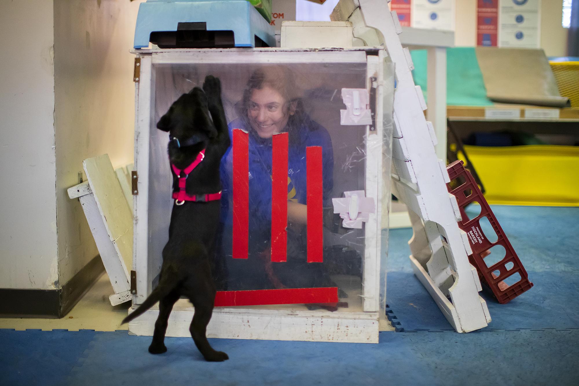 entraîneur dans une boîte avec un chien Penn Vet