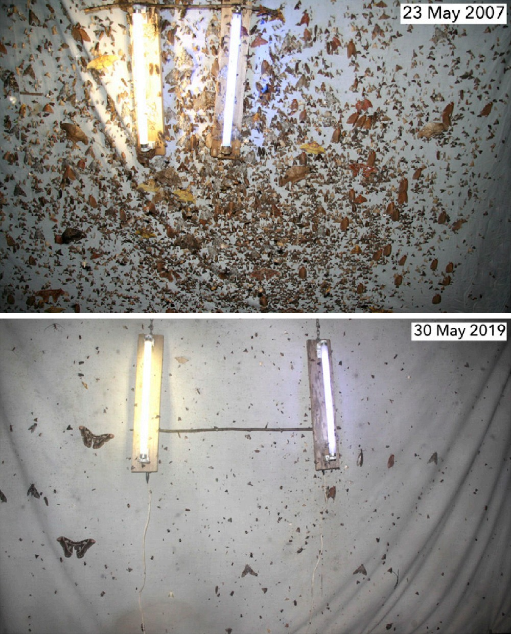 Two images, one from May 2007 and one from May 2019, show a decline in moths surveyed