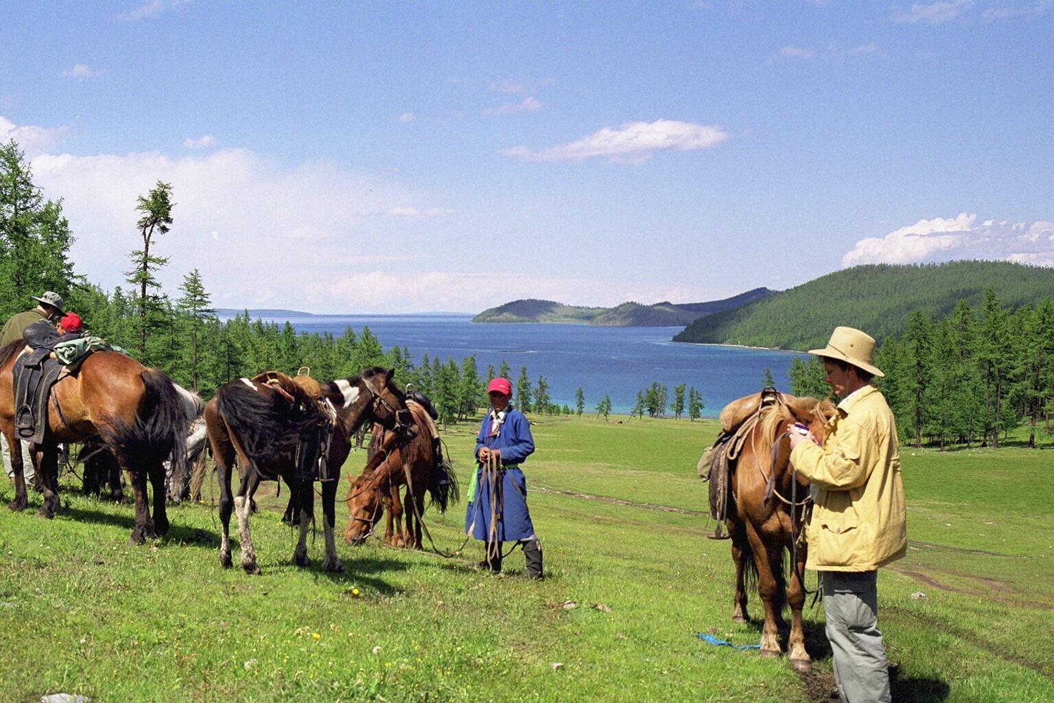 mongolian livestock