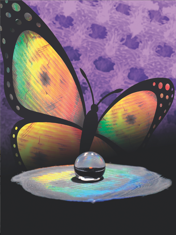 Yang's group has a new way of combining the structural color and superhydrophobicity found in butterfly wings (Credit: AFM)