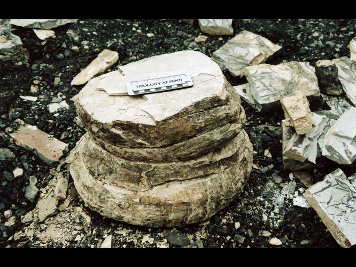Excavated base of a large fossilized tree