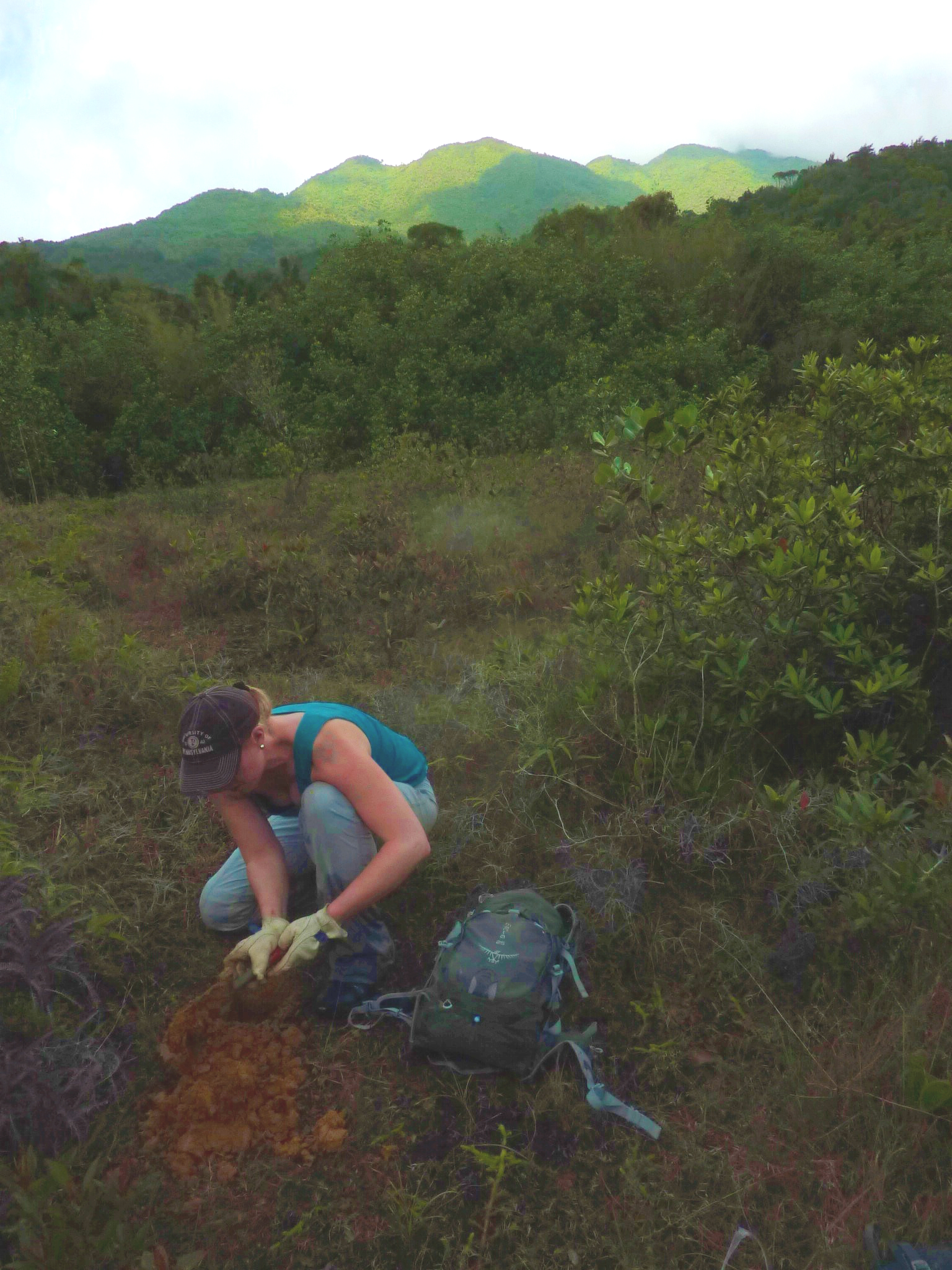 Willenbring collecting samples at El Yunque in Puerto Rico