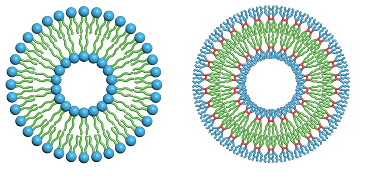 Penn Research Develops 'Onion' Vesicles for Drug Delivery ...