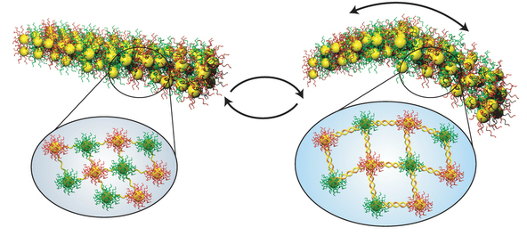 The study's nanoscale muscles are comprised of gold nanoparticles, which are connected by single-stranded DNA.