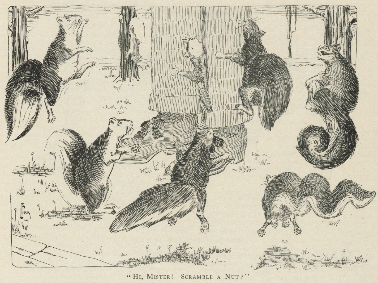 A 1903 cartoon from the Harvard Lampoon speaks to the ubiquity of squirrels in Boston. Courtesy of Harvard University Archives