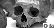 Penn Museum's Morton Skull Collection