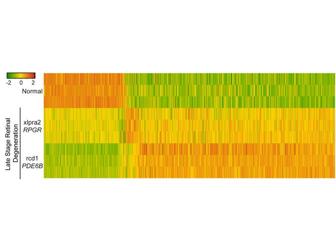 blindness heat map
