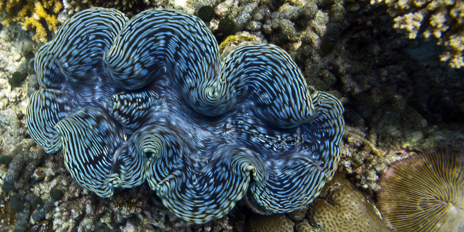 giant clam 1200x600.png