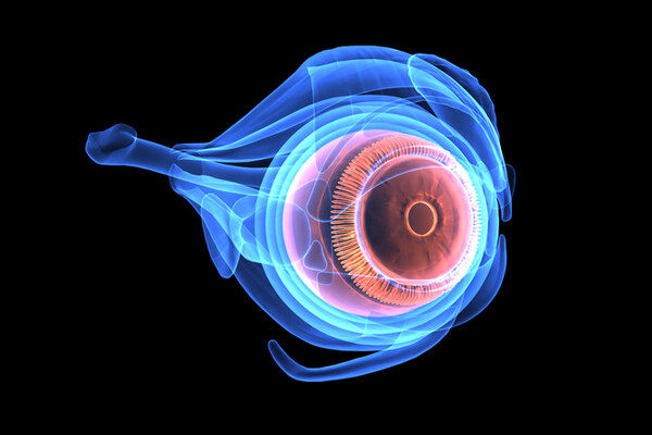 3-d-image-of-eyeball-anatomy