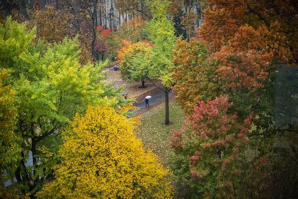 Looking down on campus through a variety of colorful treetops, people walk by holding umbrellas
