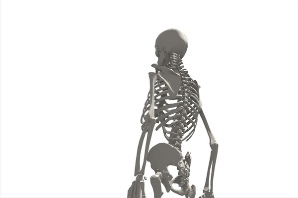 skeleton with its back facing forward