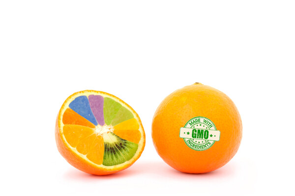 orange with GMO sticker sliced in half with different colored orange segments inside