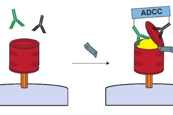 a cartoon of the HIV virus being wrapped by a can and opened by antibodies