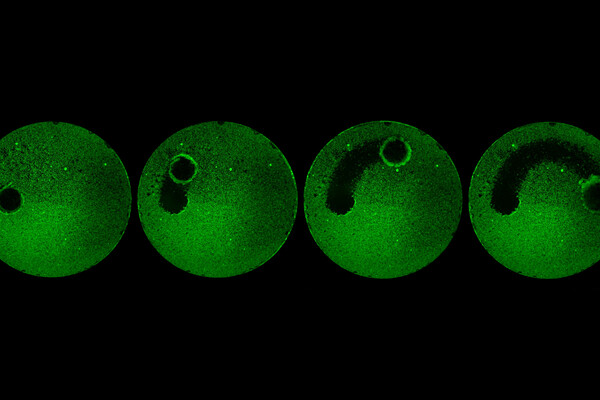 Time lapse photo of green circle shows a progressively larger cleared off area where a robot has removed a biofilm