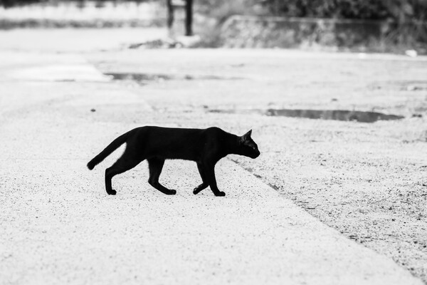 A black cat walking on a walkway