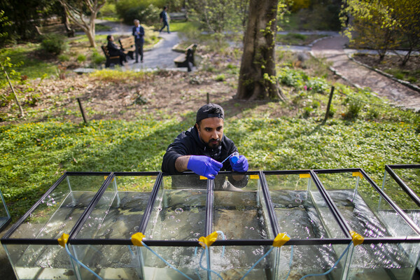 A student crouches in front of several aquariums full of water and collects a sample, surrounded by a park setting.