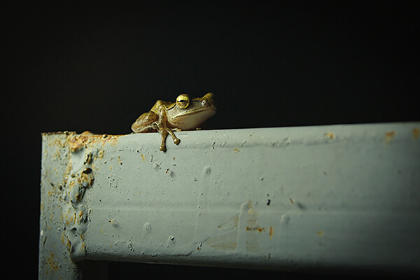 A frog resting on a rusting surface