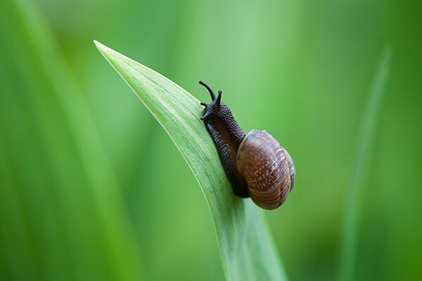 snail crawling up on single leaf