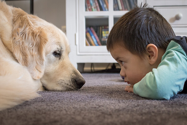 a dog and a toddler lay on a carpeted floor looking into each other's eyes.
