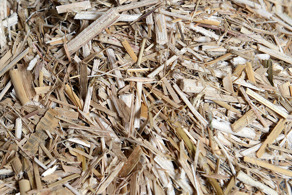 Pile of shredded straw from Miscanthus sinensis, Chinese silver grass
