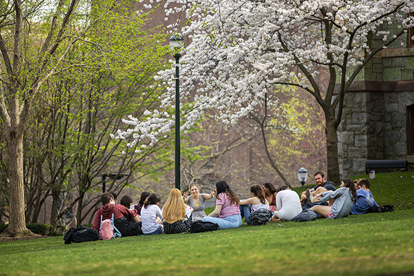 A group of students sit on the lawn under a cherry blossom tree on College Green.