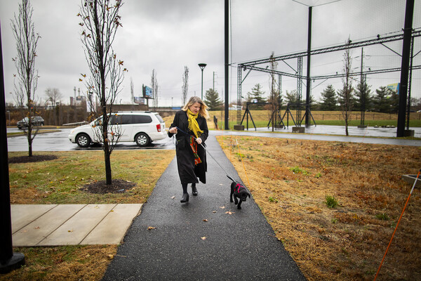 Person walks a black Labrador retriever puppy along a path from a parking lot