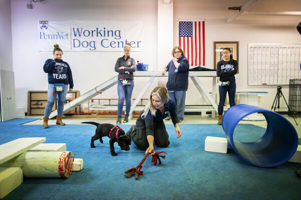 Penn Vet Working Dog Center trainer with puppy on the floor