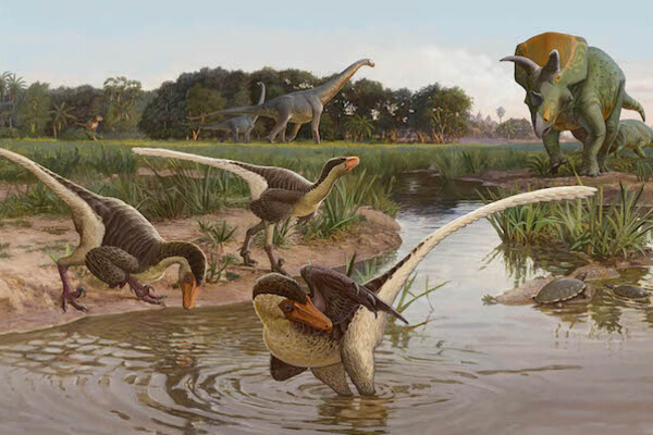 Illustration showing three feathered dinosaurs in and near a stream with other large dinosaurs nearby