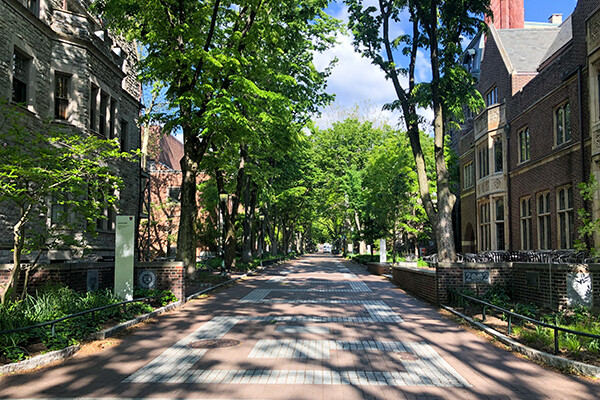 Sunlit but empty Locust Walk in springtime