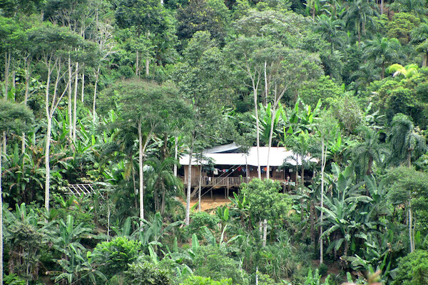 A building on stilts in the middle of a forest with banana trees