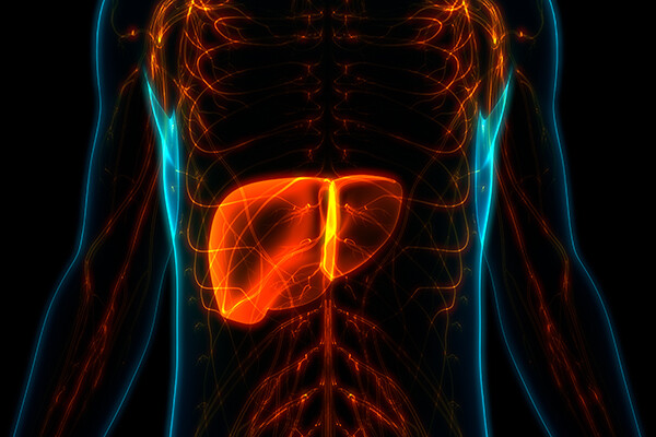 neon x-ray of a torso with the liver organ highlighted brightly