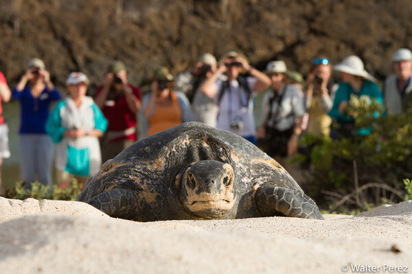 turtle in the sand in galapagos