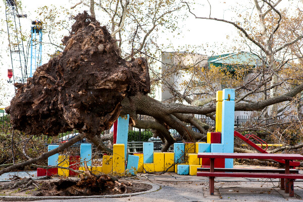a fallen tree on top of a playground next to a picnic table