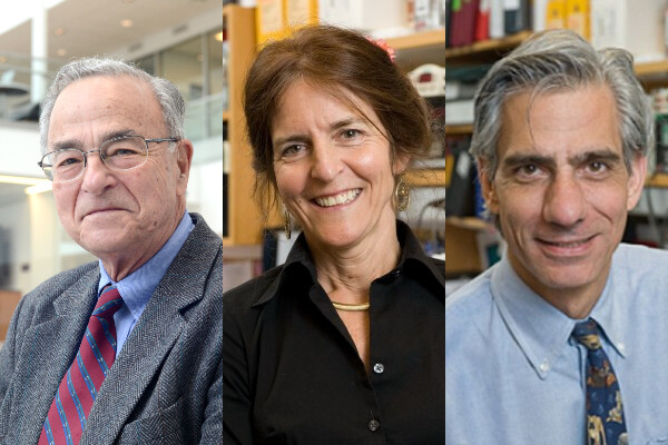Trio of photos of vision researchers Gustavo Aguirre, Jean Bennett and Albert Maguire
